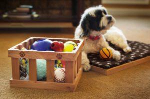 Cedrowe akcesoria dla zwierząt domowych