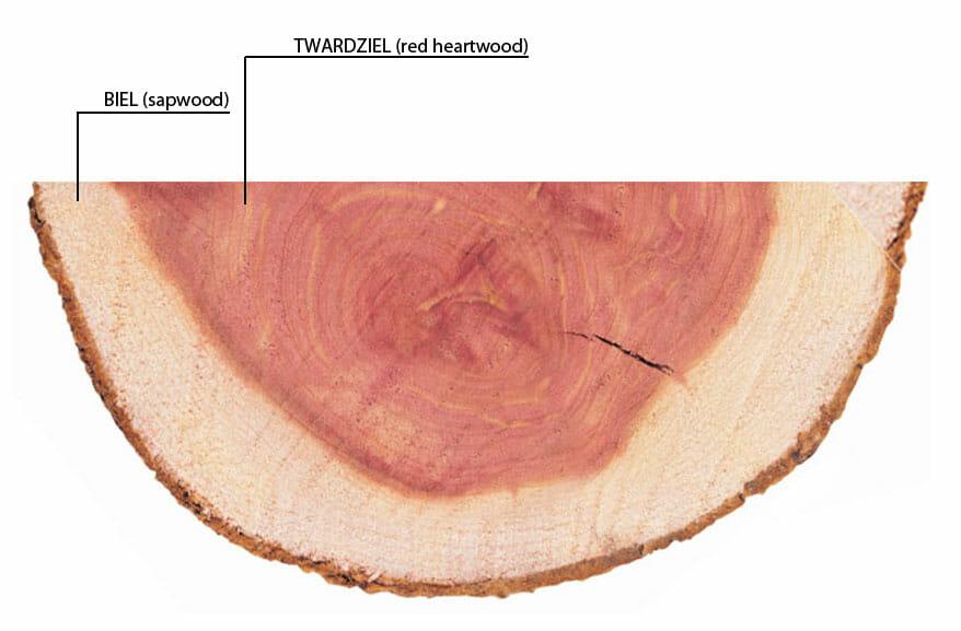 Drewno cedrowe